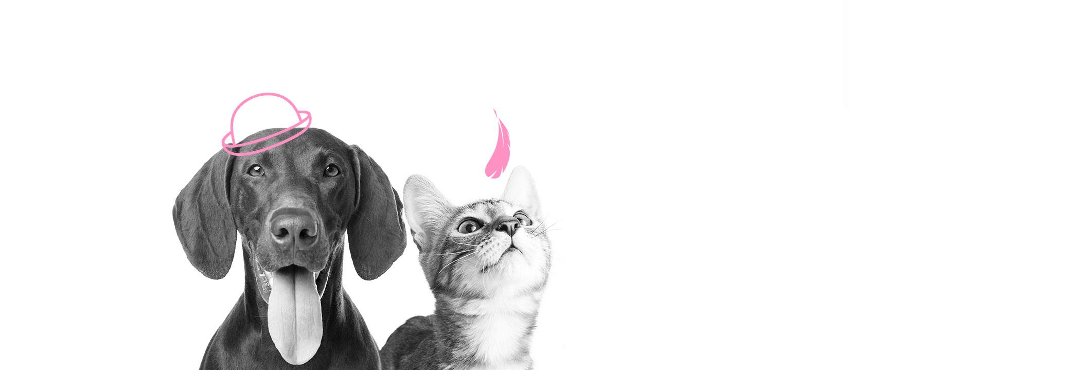 Friends for Pet, importateur et distributeur d'aliments pour chiens et chats